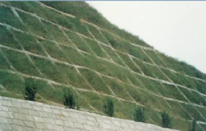 边坡植物立面图手绘